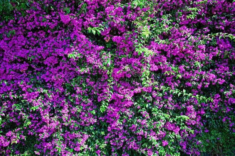 Fahne der Blumen-Background stockbild
