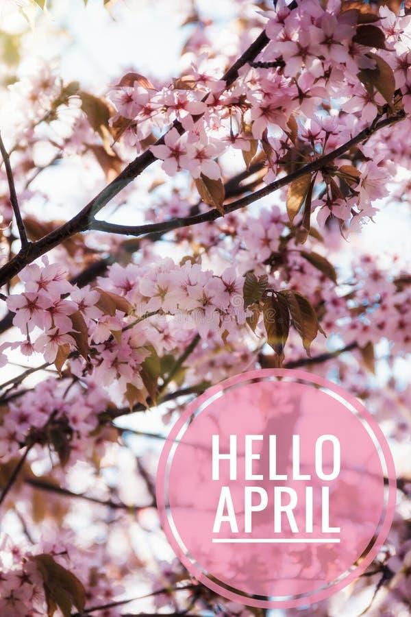 Fahne hallo April Hallo Frühling Hallo April Willkommene Karte warten wir auf den neuen Frühlingsmonat Der zweite Monat des Frühl stockfoto