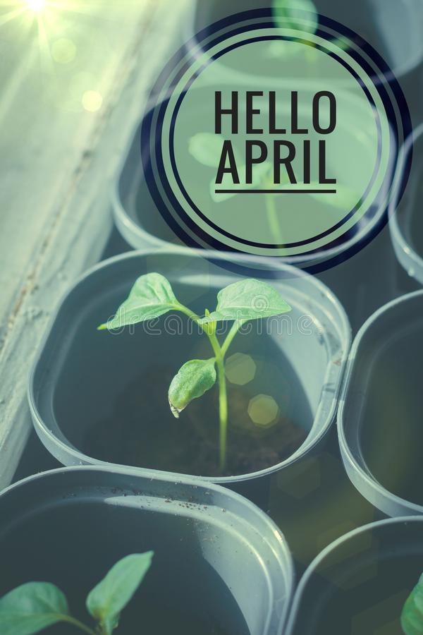 Fahne hallo April Hallo Frühling Hallo April Willkommene Karte warten wir auf den neuen Frühlingsmonat Der zweite Monat des Frühl stockfotografie