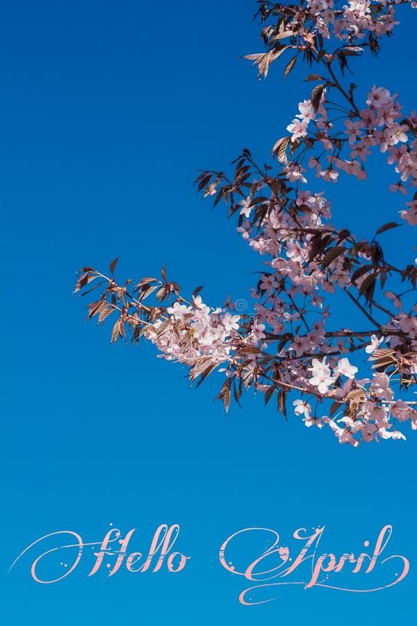 Fahne hallo April Hallo Frühling Hallo April Willkommene Karte warten wir auf den neuen Frühlingsmonat Der zweite Monat des Frühl lizenzfreies stockfoto
