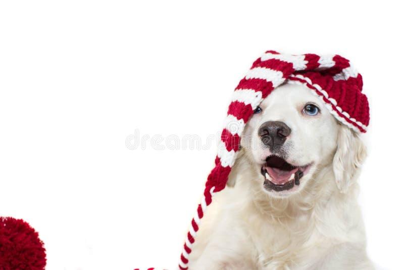 FAHNEN-WEIHNACHTShund NETTER UND GLÜCKLICHER WELPE, DER EIN GESTREIFTES ROT TRÄGT stockbild