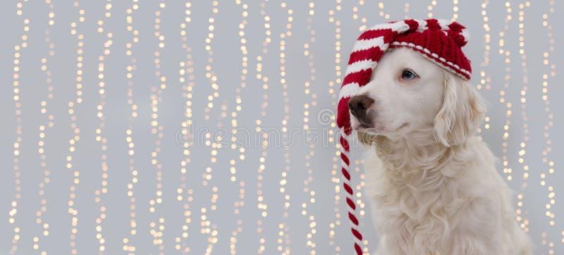 FAHNEN-WEIHNACHTShund Welpe, der einen Sankt-Hut tr?gt LOKALISIERT GEGEN GRAUEN DEFOCUSED LICHT-HINTERGRUND lizenzfreie stockbilder