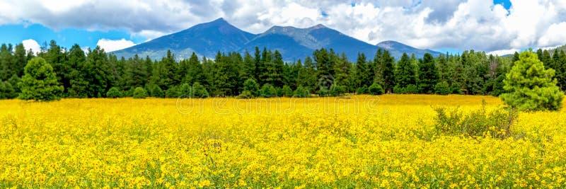 Fahnenmast-Blumen-Feld-Panorama lizenzfreie stockfotografie