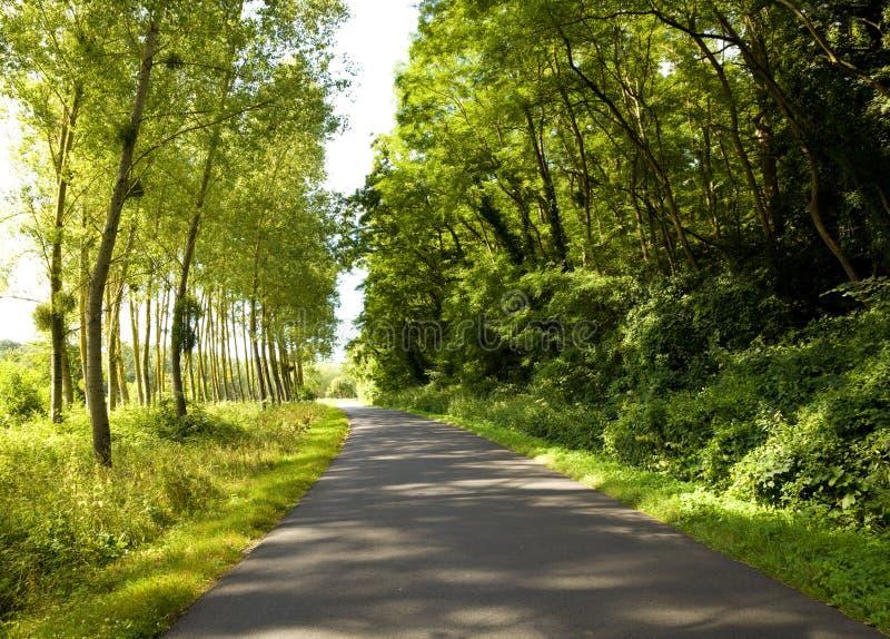 Fahrbahnabflußrinne ein gedrängter Wald lizenzfreies stockbild