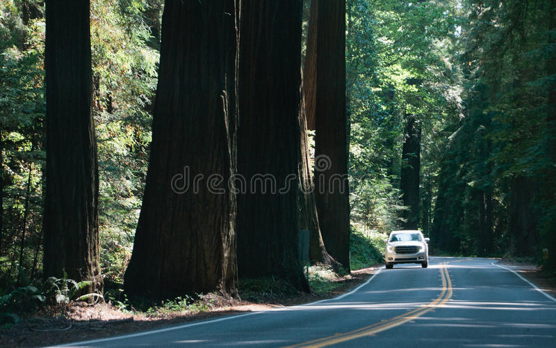Fahren durch die Allee von Giants lizenzfreies stockfoto