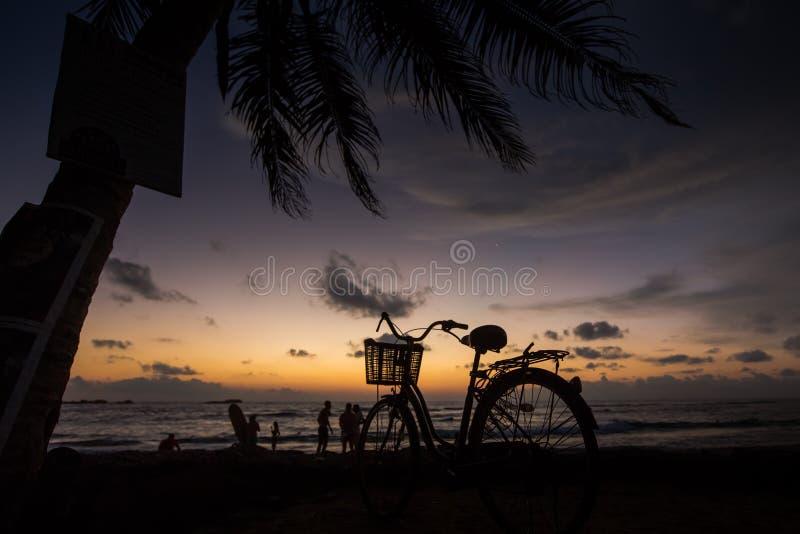 Fahren Sie auf den Strand nahe Palmen und Ozean bei Sonnenuntergang rad stockfoto