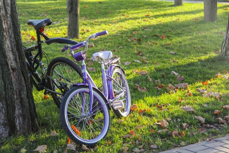 Fahrräder auf Weg des Parks lizenzfreies stockfoto