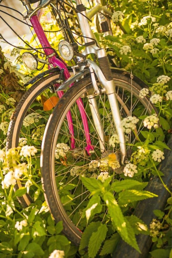 Fahrräder versteckt hinter Grundältestem lizenzfreie stockfotografie