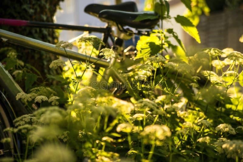 Fahrräder versteckt hinter Grundältestem stockfoto