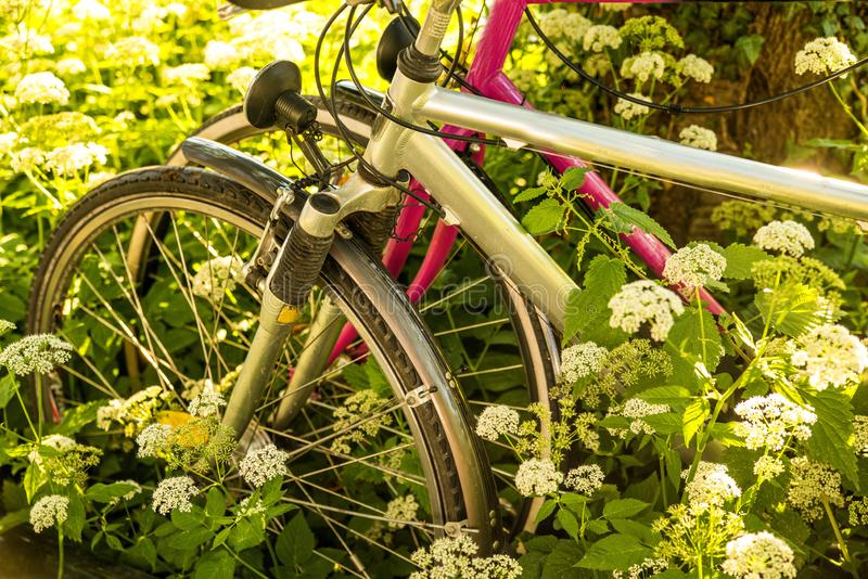 Fahrräder versteckt hinter Grundältestem lizenzfreies stockbild