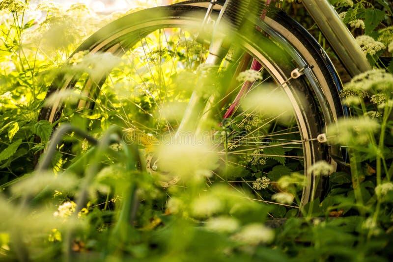 Fahrräder versteckt hinter Grundältestem stockfotografie
