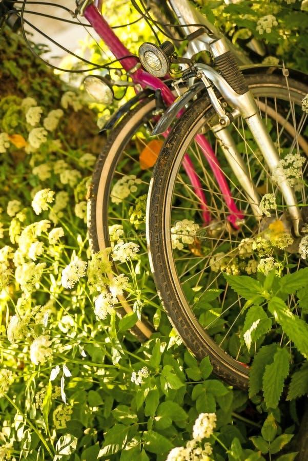 Fahrräder versteckt hinter Grundältestem stockbilder