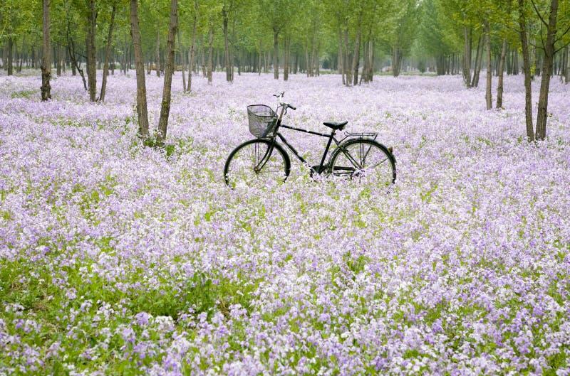 Fahrrad auf dem Blumengebiet stockbild