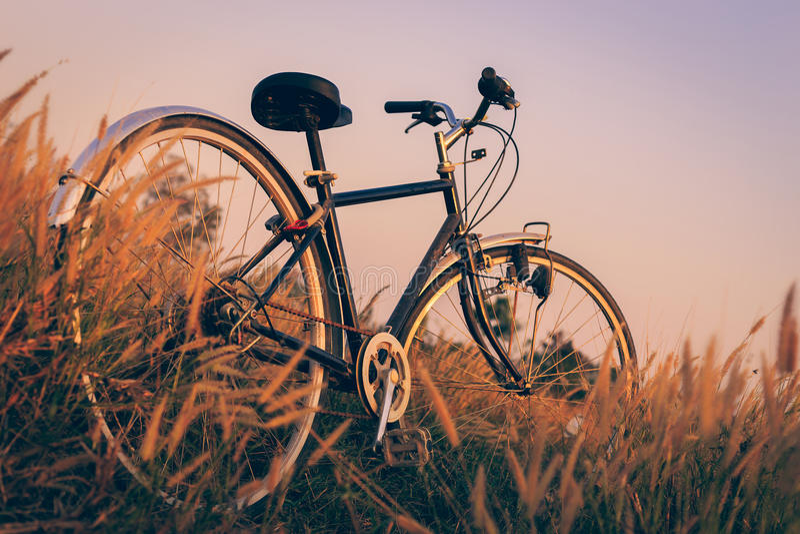Fahrrad bei Sonnenuntergang im Park lizenzfreies stockbild