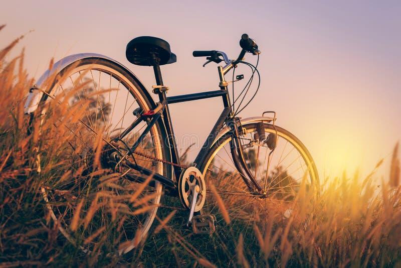 Fahrrad bei Sonnenuntergang im Park stockbild