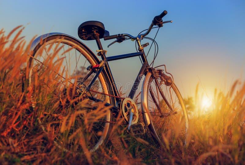Fahrrad bei Sonnenuntergang im Park lizenzfreies stockfoto