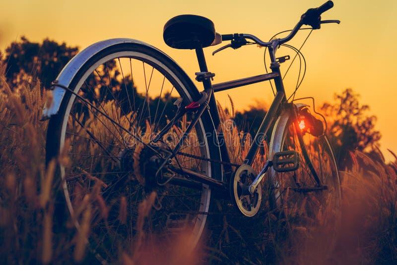 Fahrrad bei Sonnenuntergang im Park stockfotos