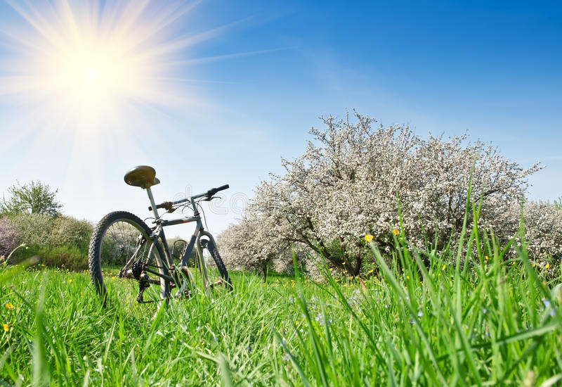 Fahrrad im Apfelgarten lizenzfreies stockfoto
