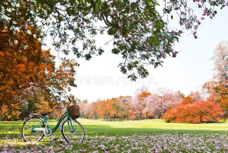 Fahrrad im Park stockbilder