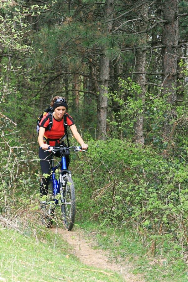 Fahrrad im Wald lizenzfreies stockbild