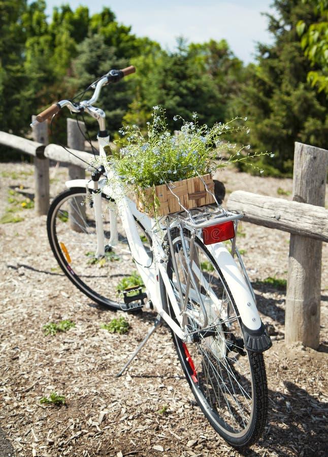 Fahrrad mit einem Eimer blauen Blumen lizenzfreies stockfoto