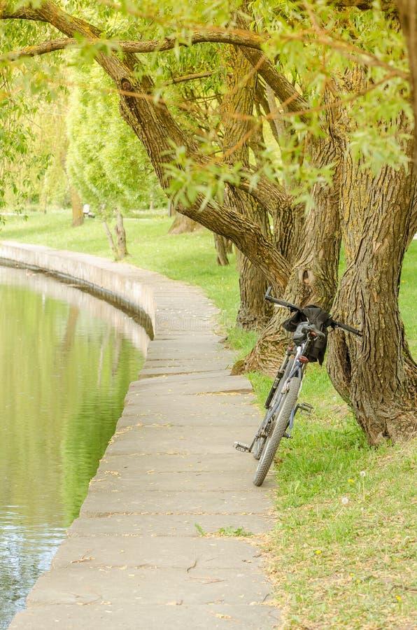 Fahrrad nahe Fluss im Park/im Fahrrad nahe Fluss im Park auf einem Sonnenuntergang stockbild