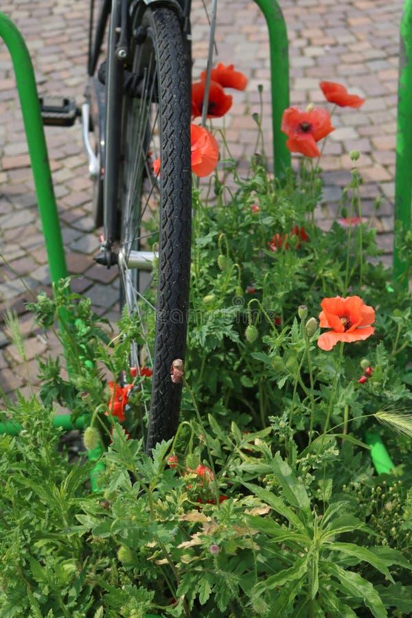 Fahrrad und Mohnblumen lizenzfreies stockbild