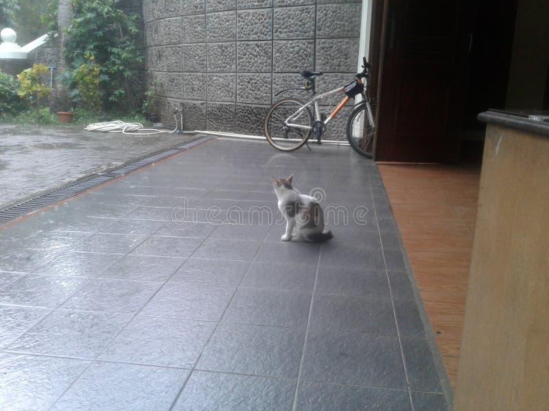 Fahrrad zu Hause stockfotos