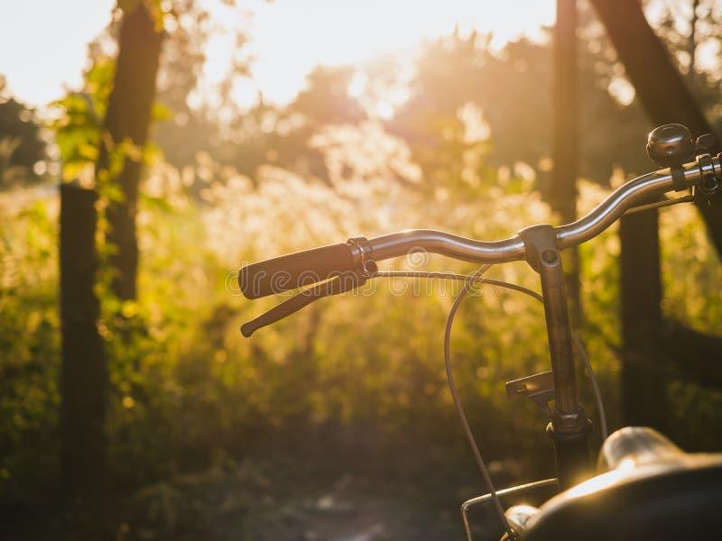 Fahrradhandsattel-Sommerwiesen fangen im Freien Sonnenaufgang auf stockbild