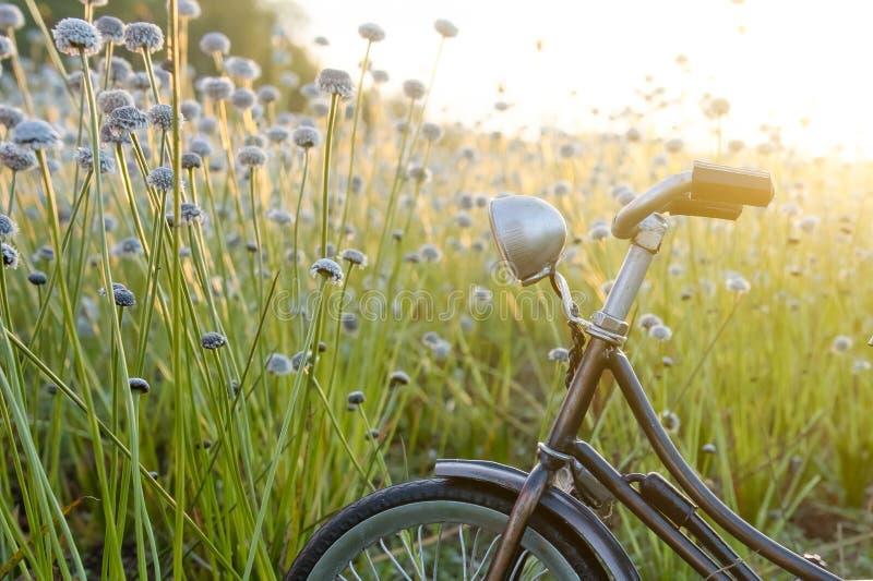 Fahrradpark am schönen Blumengras mit schönem Licht stockfoto