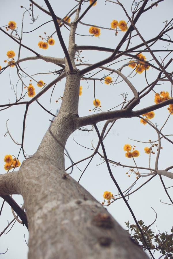 FAIKHAM bloemen royalty-vrije stock afbeeldingen