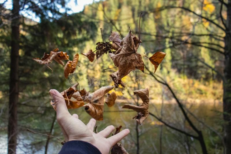 Failing leaves from my hand in front of an lake. Failing leaves from my hand royalty free stock photo