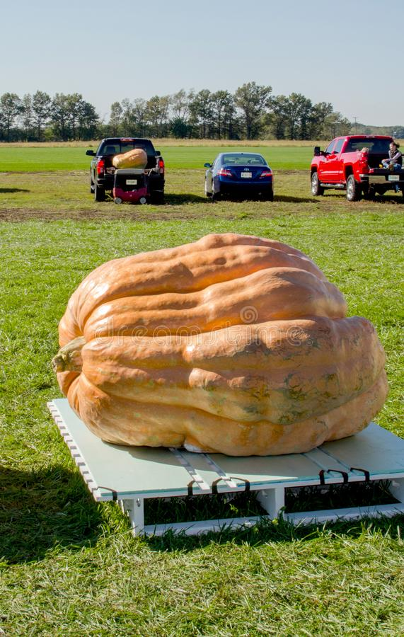 Giant pumpkin at a outdoor event royalty free stock image