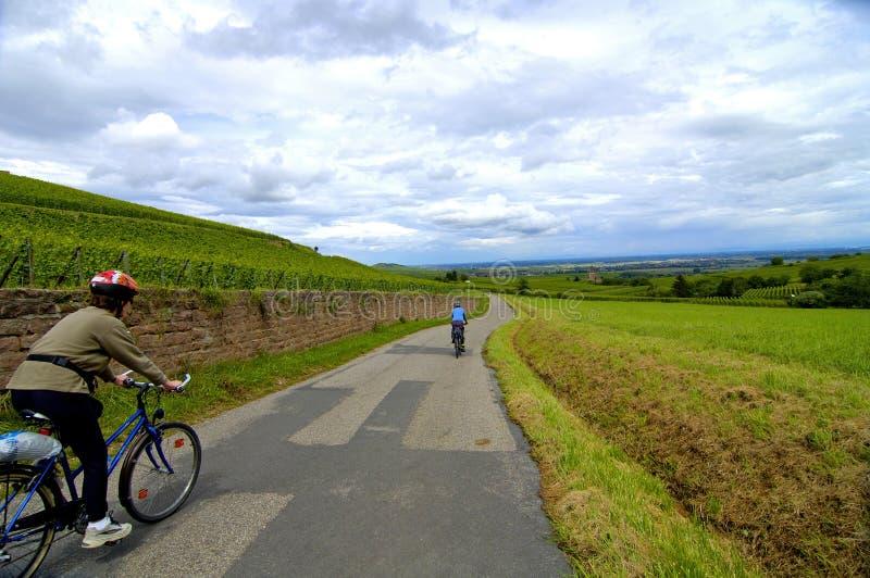 Faire du vélo dans les vignes photo libre de droits