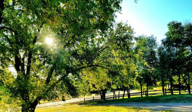 Faire une pointe du soleil a jeté les feuilles de chute photos libres de droits