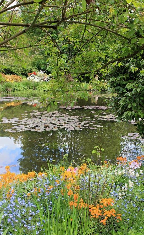 Fairy ландшафт с lilys воды стоковые фото