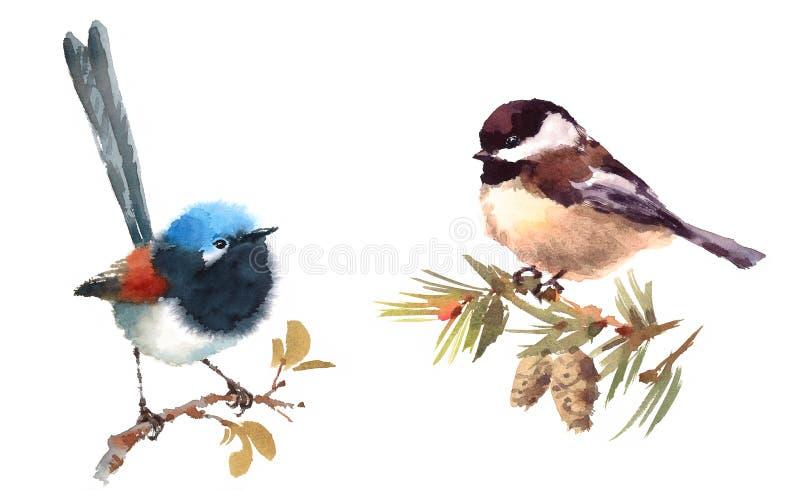 Fairy нарисованная рука иллюстрации акварели птиц крапивниковые и Chickadee установленная иллюстрация штока