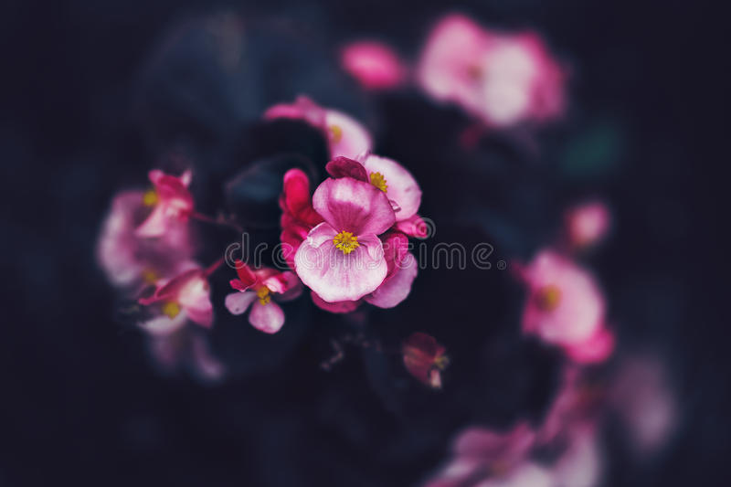 Fairy dreamy magic pink purple flowers on faded blurry background, toned with instagram filters in retro vintage style with film. Beautiful fairy dreamy magic royalty free stock image