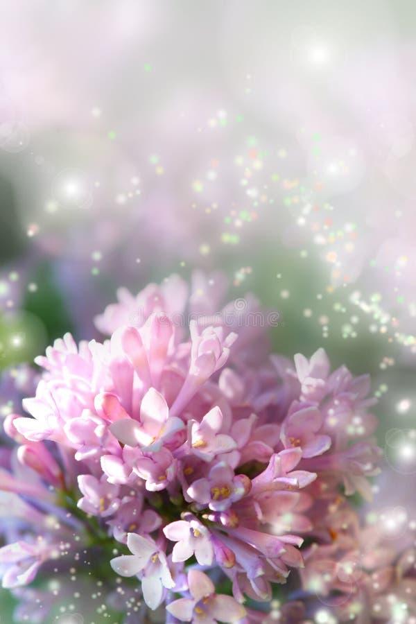 Fairy dust on lilac stock photos