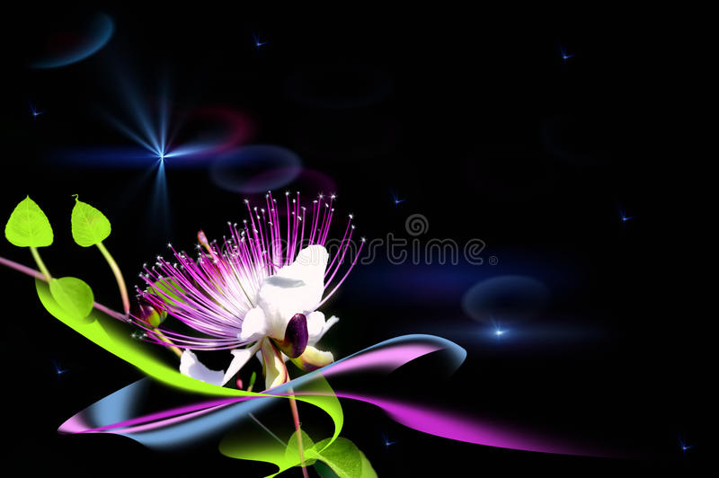Download A fairy flower stock illustration. Image of flare, black - 25577094