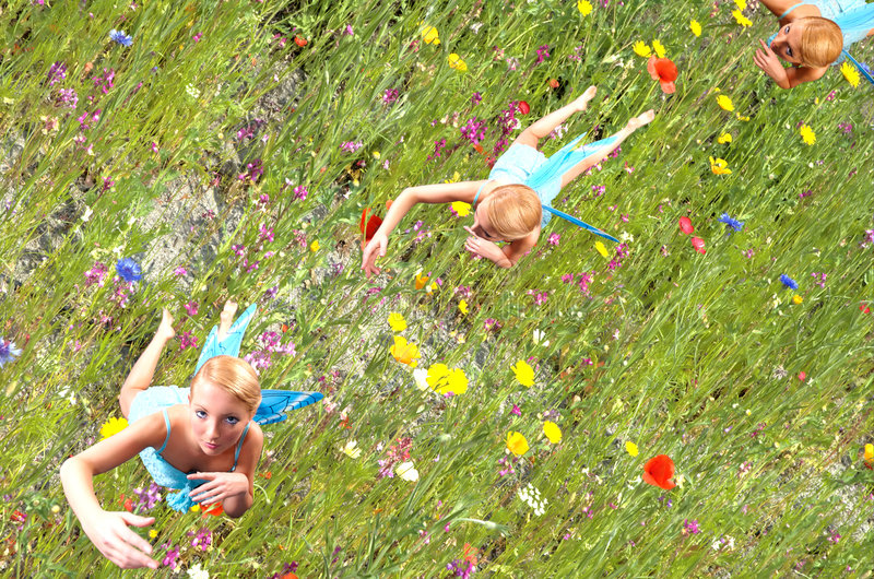 Fairy flying over flowers stock photography