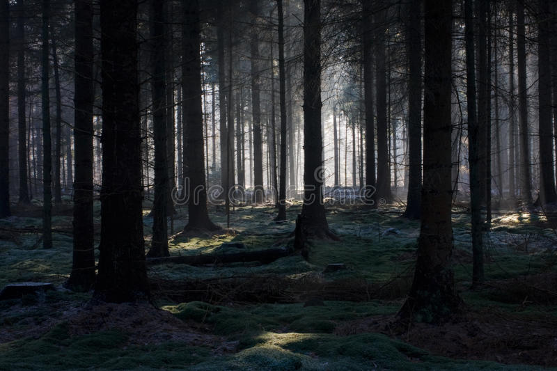 Download Fairy forest stock image. Image of landscape, morning - 13149101