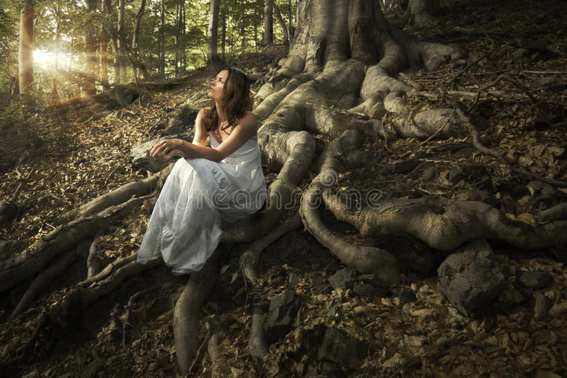 Fairy of the forest stock image