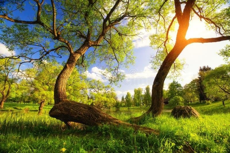 Summer vibrant landscape royalty free stock photos