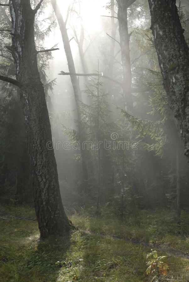 Fairy tale forest. stock photos
