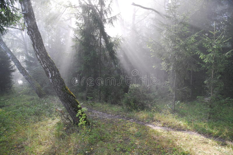Fairy-tale forest. stock photo