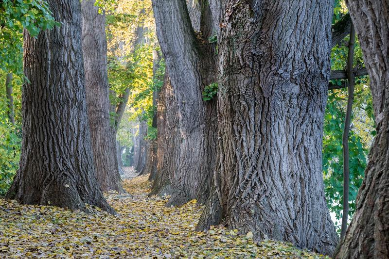 Fairy tale path in a forest at autumn royalty free stock photography