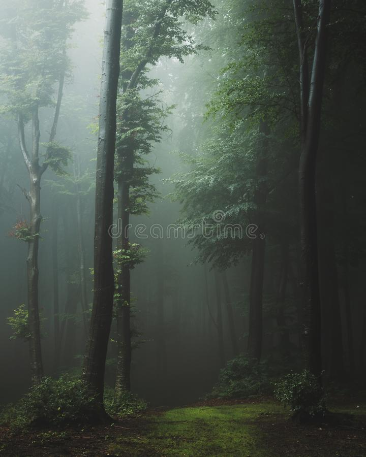 Fairy tale trail in foggy forest. Fantasy spooky landscape in woodland. Mysterious foggy forest royalty free stock photos