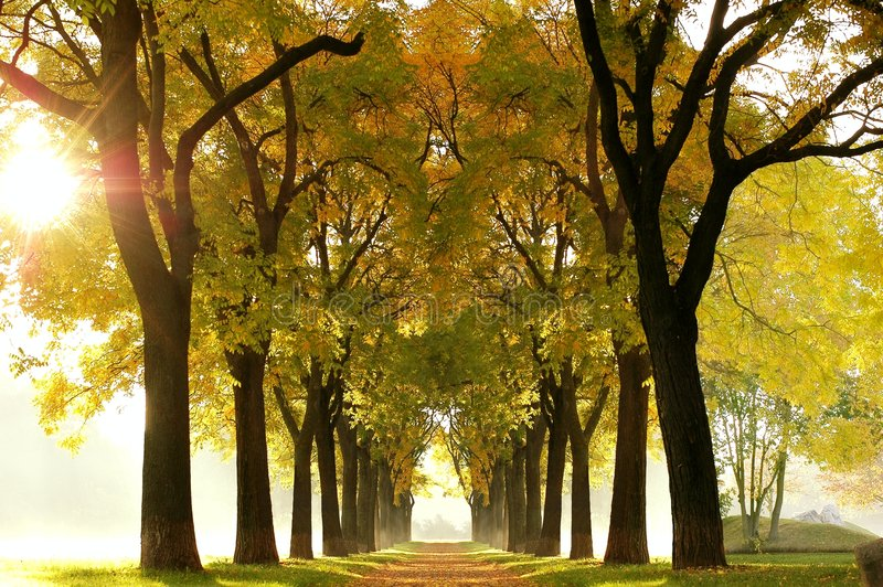 Fairy Tale Wood royalty free stock images
