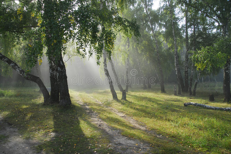 Fairy-talewald. lizenzfreie stockfotos